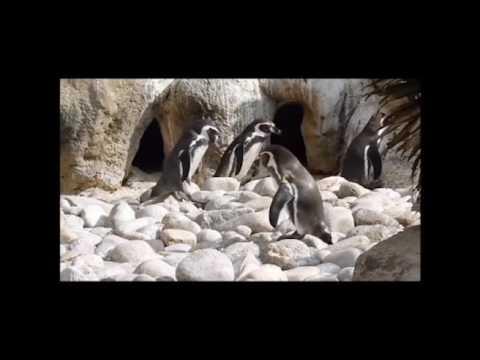 El zoo de Barcelona parece una discoteca