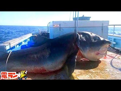 【衝撃】実際に釣れた巨大すぎる海洋生物8選