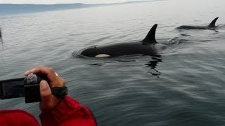 Orcas in Vancouver Island, B.C.