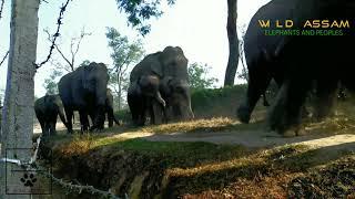 ELEPHANT HERD ON MOVE