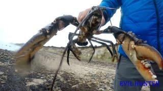 lobster catch and cook ПОДВОДНАЯ ОХОТА НА ЛОБСТЕРА 2019 Evil Hunter