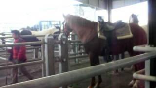 la foire aux chevaux en Limousin