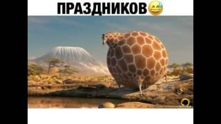 Вздутые животные