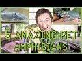 Five Of The Best Pet Amphibians