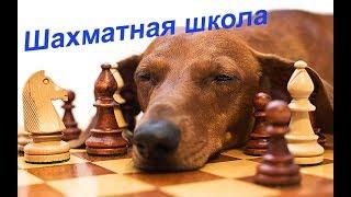 Урок 22. Связь стратегии и тактики в шахматах.