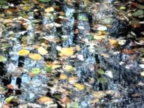 Les feuilles mortes d'après Gainsbourg et Prévert