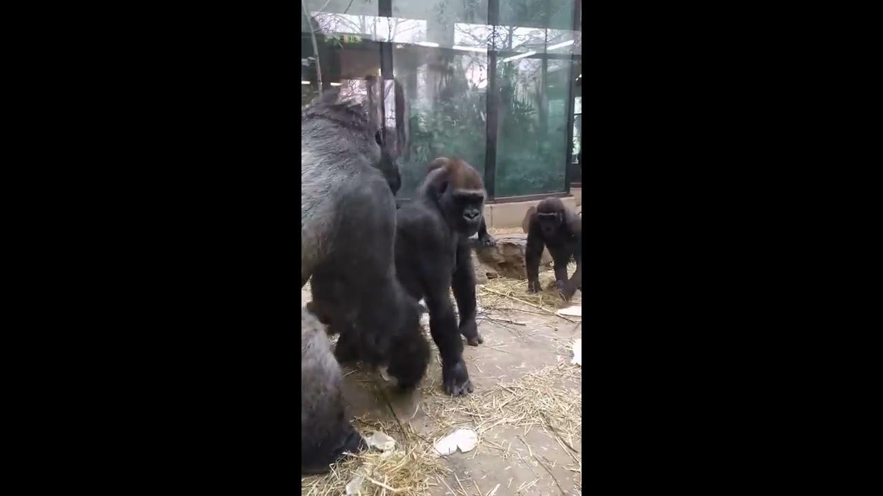 Первая зоо порно фото