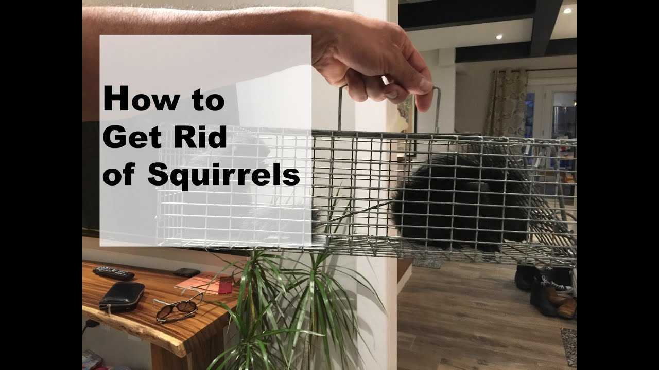how to get rid of squirrels youtube