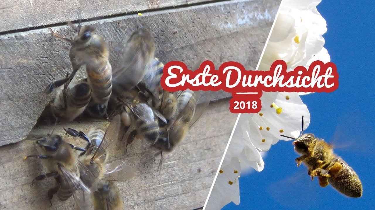 Erste Durchsicht meines Bienenvolkes 2018 Artikelbild