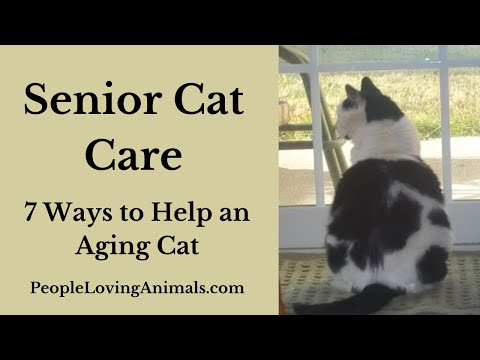Senior Cat Care  7 Ways to Help an Aging Cat