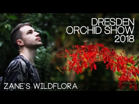 On The Go: Dresden Orchid Show 2018 / with Rachel from Gardening at Douentza