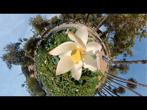 Enjoy Dazzling & Dizzying 360° Virtual Tours of Los Angeles Landmarks