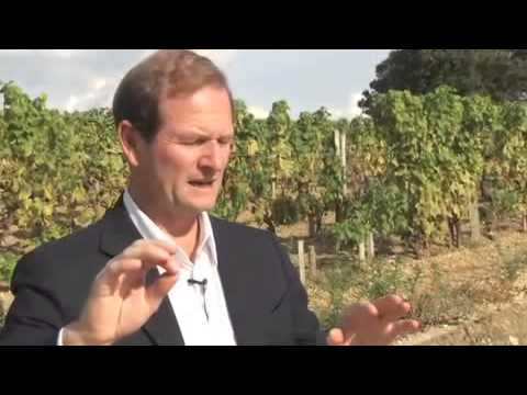 WineSenseTV.com: Chateau d'Yquem