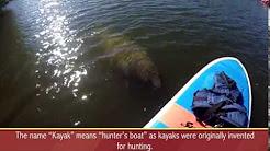 Naples Florida Paddle Boarding & Kayak Rentals