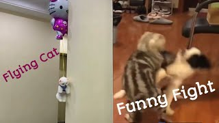 Aww Dog And Cats 😻 Funny Pets Compilation - Cute Animals Video 2020