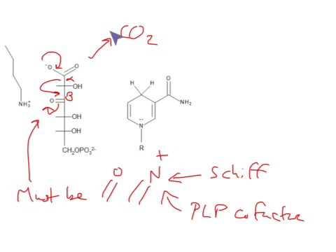 Dehydrogenaasi