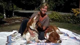Bellingham Bassets Kennel Our European Basset Hound Studs