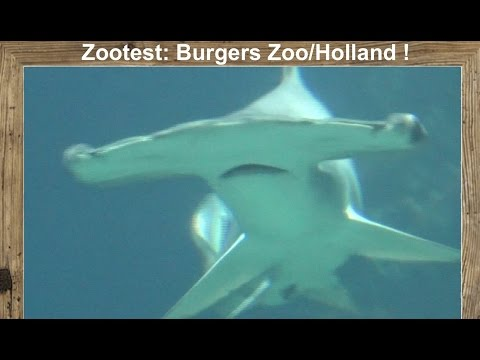 Folge 14 - Zootest: Burgers Zoo, Holland/ Tiernews