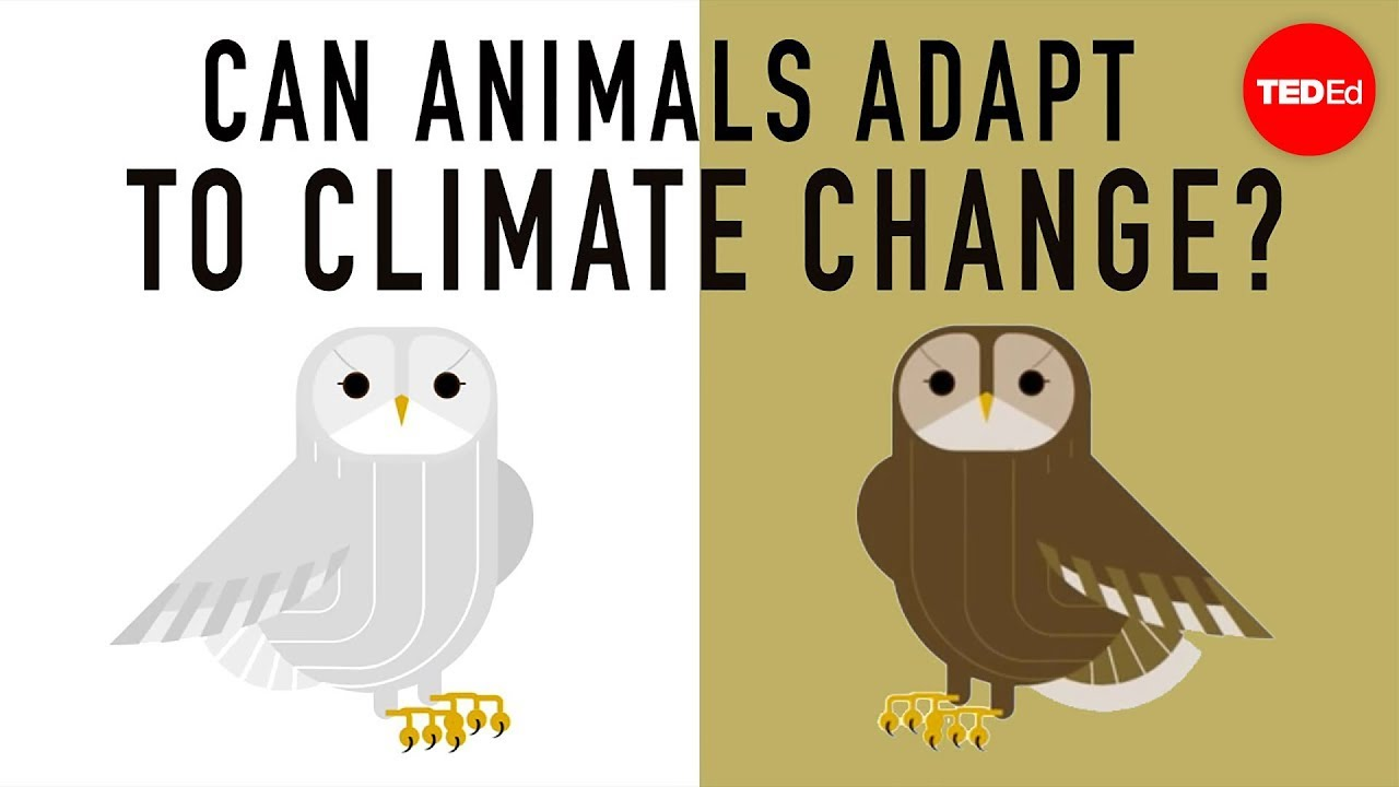 medium resolution of Can wildlife adapt to climate change? - Erin Eastwood - YouTube