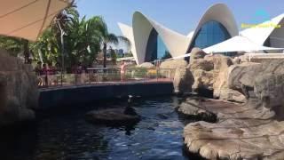Испания : время жить...Океанографик Валенсия(Океанографик - это самый большой аквариум в Европе. Океанографический парк Валенсии является частью Города..., 2016-09-20T11:50:19.000Z)