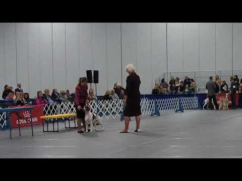 Dog Fanciers Association of Oregon - Friday, Jan 19th - Sporting (Judge: Ms Karolynne M Mcateer)
