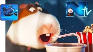 Тайная Жизнь Домашних Животных - Короткометражка «Норман TV»
