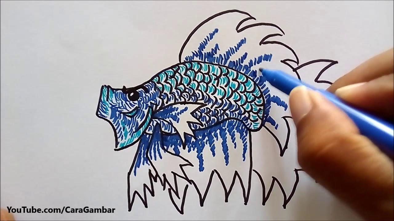 Cara Gambar Ikan Cupang Youtube