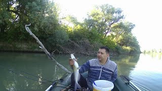 река Кубань рыбалка ловля сома в Кубани рыбалка на кубани сом на печень