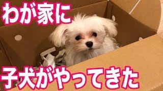 犬のマルチーズパンナのチャンネル登録よろしくお願いします! https://...