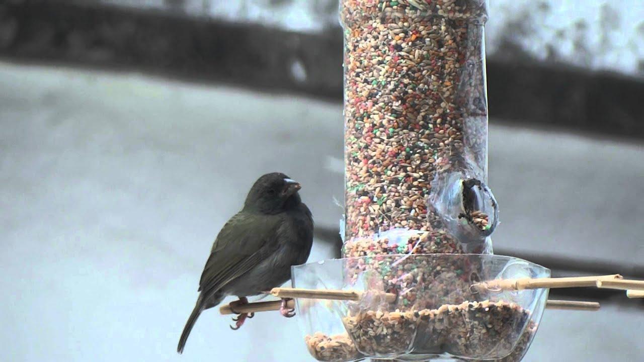 Comedero para aves youtube for Casetas de plastico para jardin