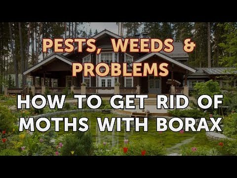 How to Get Rid of Moths With Borax