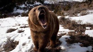 Классный  фильм! Человек   медведь  Документальные фильмы1