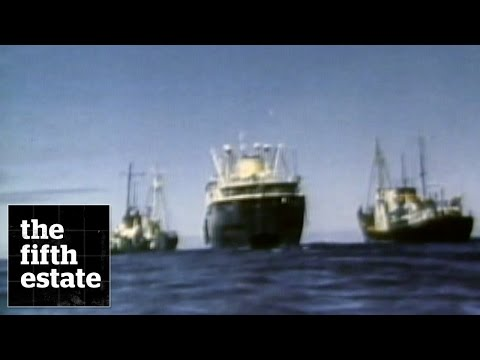 Whalers vs. Greenpeace : Standoff on the High Seas - the fifth estate