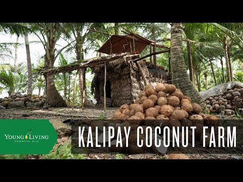 kalipay-coconut-farm-|-young-living-essential-oils