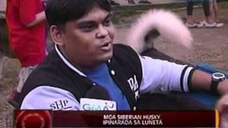 24 Oras: Mga Siberian Husky, Ipinarada Sa Luneta
