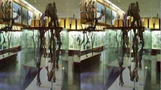 видео 3 d музей в москве