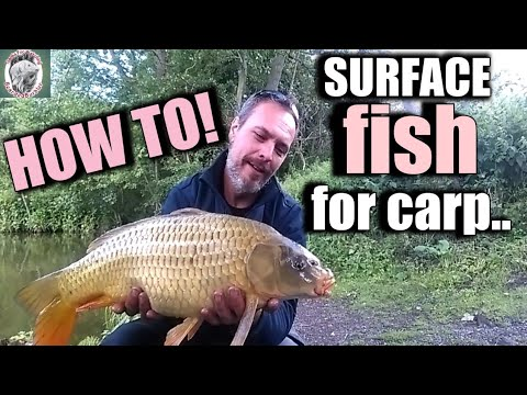 HOW TO SURFACE FISH FOR CARP | CARP FISHING | POLARIZED GLASSES REVIEW |