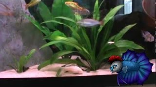 How To Grow Amazing Aquarium Plants