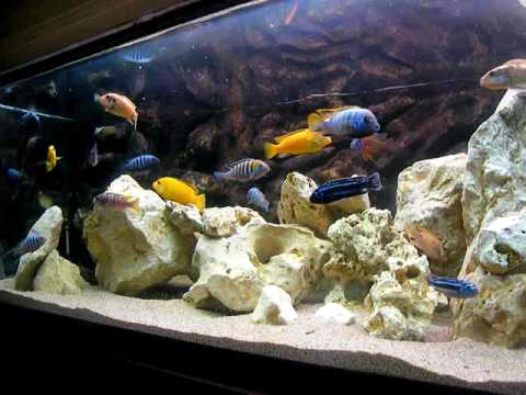 malawi aquarium april 2010 orio bucharest youtube. Black Bedroom Furniture Sets. Home Design Ideas