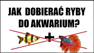 Jak dobierać ryby do  akwarium towarzyskiego?