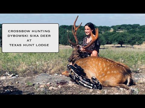 Young Huntress Crossbow Hunting Dybowski Sika at Texas Hunt Lodge
