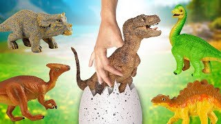 HATCH DINOSAUR EGGS IN MY TOY BOX! Dinosaur Toys Animation for kids - T-Rex Triceratops Stegosaurus