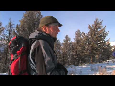 Snowshoe Hike in Yellowstone - Yellowstone Association Institute