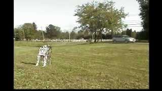 Honda 80cc dirt bike stunts