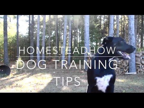 Dog Training Tips from HomeStead How