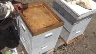 осмотр семей 9 дней после первой откачки мёда 13,5,2017