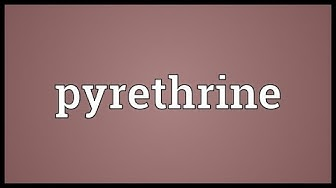 Pyrethrine Meaning