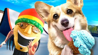 Happy Corgi Vs Bob Marley Funny Corgi Play