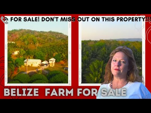 Belize Lychee Farm For Sale Cristo Rey Cayo District