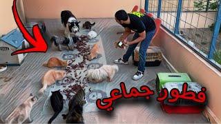 تجربة اكل 300 حبه مكافآة كلاب !! لحيوانات المزرعه 😱